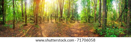 Panorama of a mixed forest at summer sunny day - stock photo