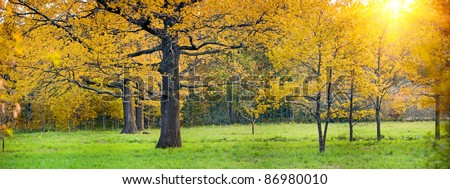 Panorama of a mixed forest with oak in autumn sunny day - stock photo