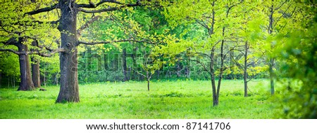 Panorama of a mixed forest with oak in spring sunny day - stock photo