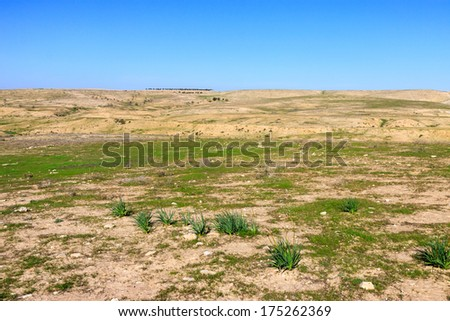 Panorama of a stone desert with green grass and bushes - stock photo