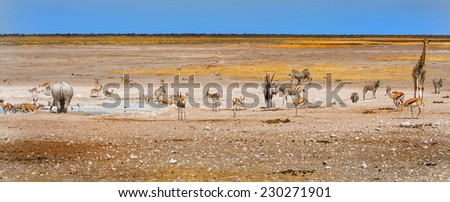 Panorama of a waterhole in Etosha National park with various species of game - stock photo