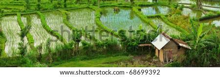 Panorama of beautiful rice field in Bali countryside - stock photo