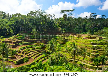 Panorama of beautiful rice terraces at Central Bali - stock photo