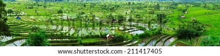 Panorama of beautiful terraced rice field on Bali Indonesia - stock photo