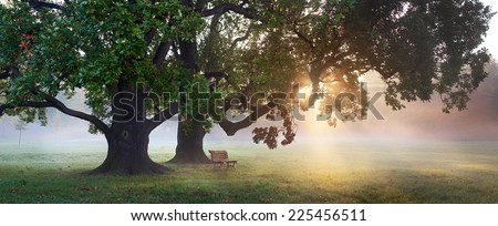panorama of bench under old oak trees at misty autumn morning with sunbeams shining thru leaves
