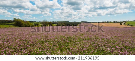 Panorama of clover flowers in bloom (Green Gables Shore; Prince Edward Island; Canada) - stock photo