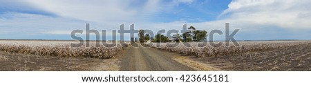 Panorama of Cotton Fields at Australia - stock photo