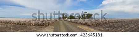 Panorama of Cotton Fields at Australia - stock photo