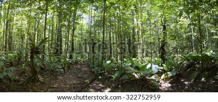 Panorama of deep green jungle forest on the way to Salto Angel in Canaima National Park, Venezuela. - stock photo
