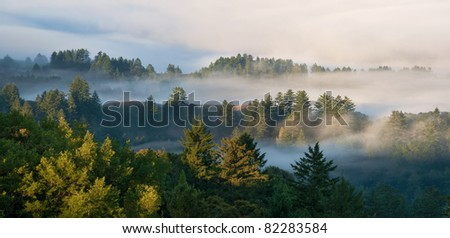 Panorama of foggy sunrise in a mountain forest in California - stock photo