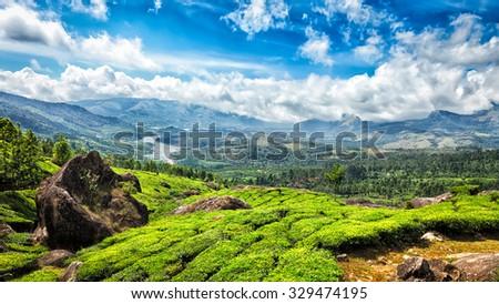 Panorama of green tea plantations in Munnar, Kerala, India - stock photo