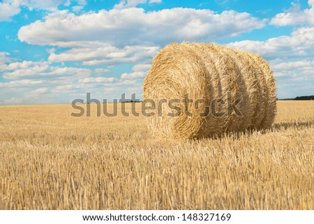 panorama of harvested field with straw bales in summer bright day with blue sky
