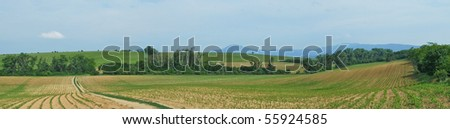 Panorama of landscape with corn field