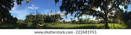 Panorama of live oak trees in Central Florida - stock photo