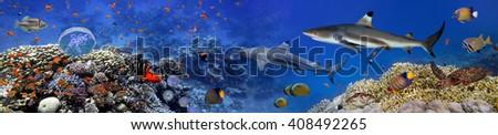 Panorama of marine species., Red Sea, Egypt - stock photo
