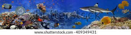 Panorama of marine species. Red Sea, Egypt - stock photo