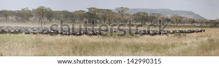 Panorama of migration of wildebeest antelopes in East Africa - stock photo