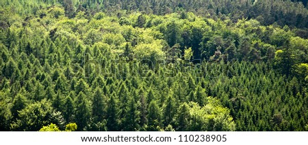 Panorama of mixed forest - stock photo