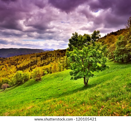 Panorama of mountains with tree - stock photo