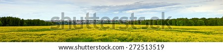 Panorama of mustard plants flowering along the field. Mustard blossom in front, town landscape on the back, forest on the sides of picture. - stock photo
