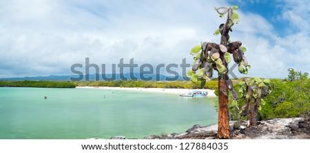 Panorama of opuntia cactus forest and ocean at Galapagos island of Santa Cruz - stock photo
