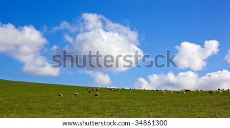 Panorama of sheep grazing on a lush green hillside meadow, with glorious sky behind. - stock photo