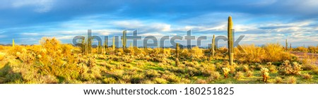 Panorama of Sonoran Desert. - stock photo