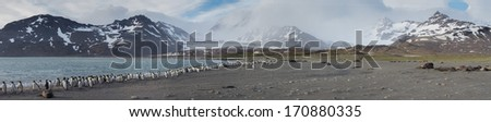 Panorama of St. Andrews Bay with thousands of King Penguins below snow capped mountains