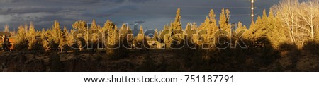 Panorama of sunset conifers with backlit storm clouds over Crooked River gorge, Oregon