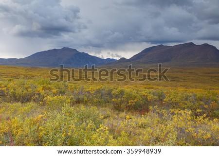Panorama of the Alaskan landscap standing on the Denali highway - stock photo