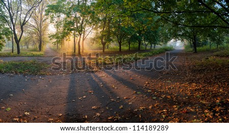 Panorama of the big maple alleys with yellow leaves on earth and sun rays, autumn landscape - stock photo