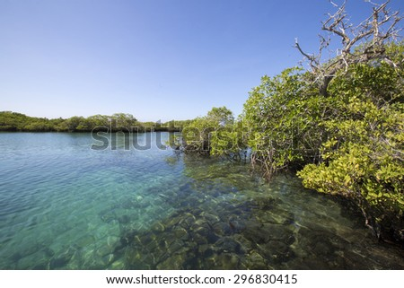 Panorama of the mangrove and the Pacific ocean in Isla Isabela. Galapagos Islands, Ecuador 2015 - stock photo