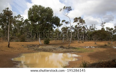 Panorama of the muddy lake in  Crooked Brook national park in Western Australia  with Corymbia calophylla ( Eucalyptus calophylla,Marri , Port Gregory Gum )   bloodwood native to Western Australia .   - stock photo