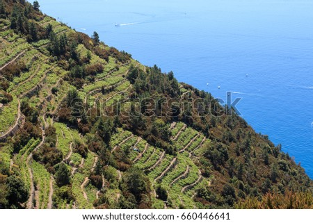 Panorama of the vineyards on the terraced terrain of the Cinque Terre, overlooking the sea