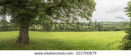 Panorama of the Welsh countryside with tree in foreground - stock photo