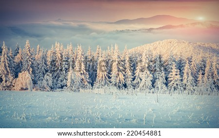 Panorama of the winter sunrise in the foggy mountains. Retro style. - stock photo