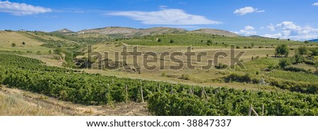 panorama of vineyard on hills - stock photo