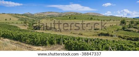 panorama of vineyard on hills - stock photo