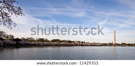 Panorama of Washington Monument with Cherry blossoms and Tidal Basin - stock photo