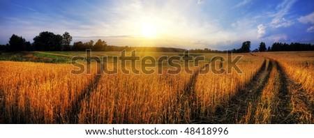 Panorama of wheat field at sunset - stock photo