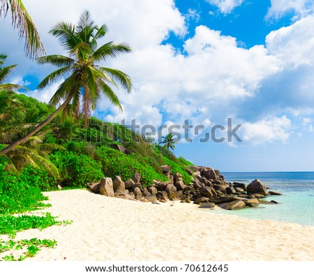 Panorama Palms Tranquility - stock photo