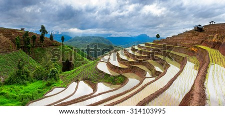 Panorama terraced rice field with mountain range background, Press and pinch  width scale of image be narrow - stock photo