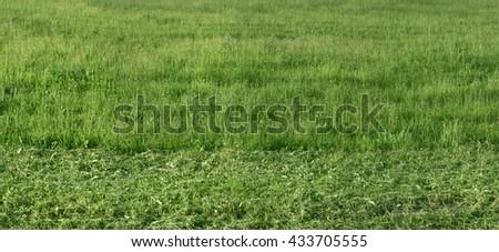 panorama, texture, grass - stock photo