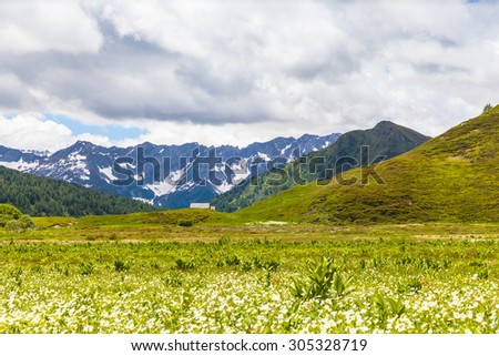 Panorama view of the mountain range of swiss Alps in Canton Tessin (Ticino),  with beautiful flowers in foreground.