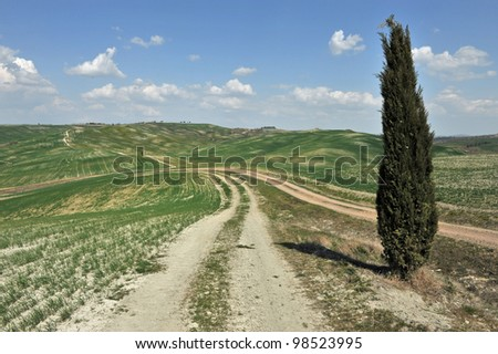 Panorama with Cypresses, image of typical tuscan landscape - stock photo