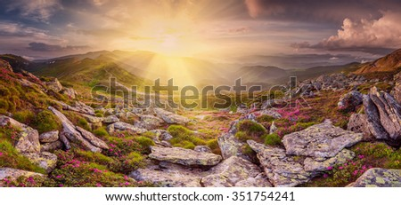 Panorama with flowers in mountain and rainbow in sky - stock photo