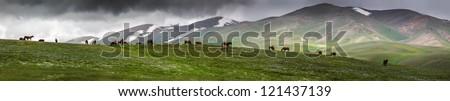 panorama with grazing horses - stock photo