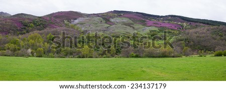 Panorama with spring mountain landscape with meadows, woods and hills with heather mauve and vegetation varied species  - stock photo