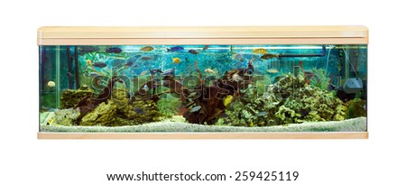 Panoramic aquarium with Malawi cichlids - stock photo