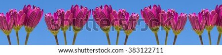 Panoramic background of flowers - stock photo